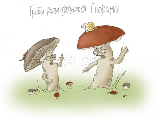 Картинка  про грибы, спор, размножение игра слов