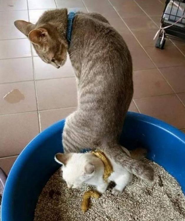 Фото прикол  про котов, дефекацию отвратительный