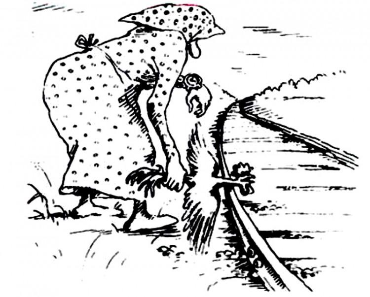 Картинка  про петуха, поезда черный