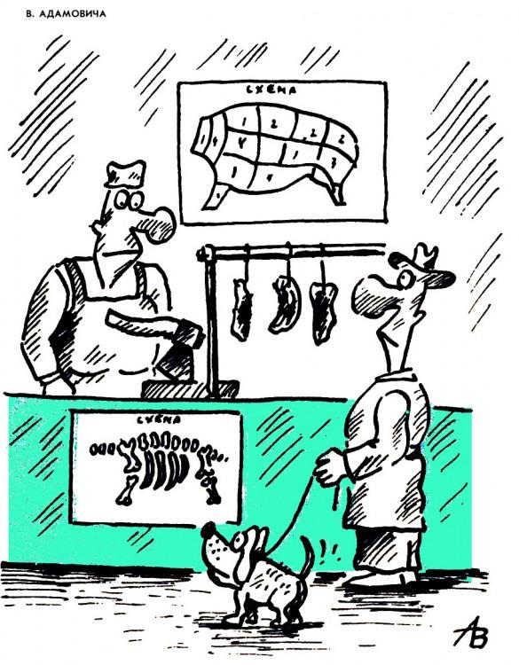 Картинка  про магазин, мясо, собак и кости