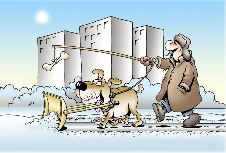 Картинка  про собак, кости и снег