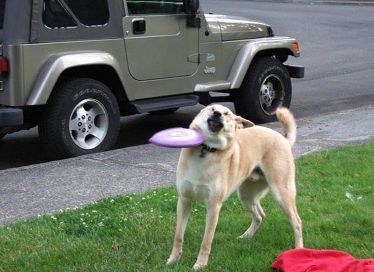 Фото прикол  про собак и тарелки