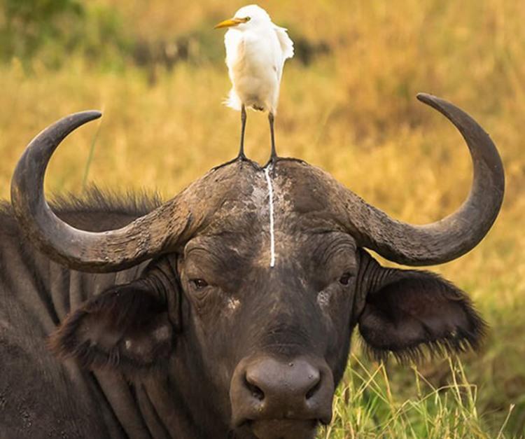 Фото прикол  про птиц и кал