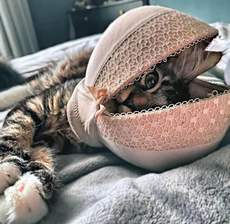 Фото прикол  про бюстгальтер и котов