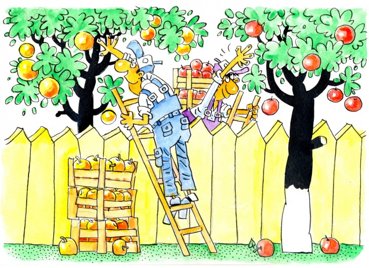 Картинка  про яблоки и воровство